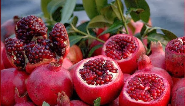 Pomegranate holiday