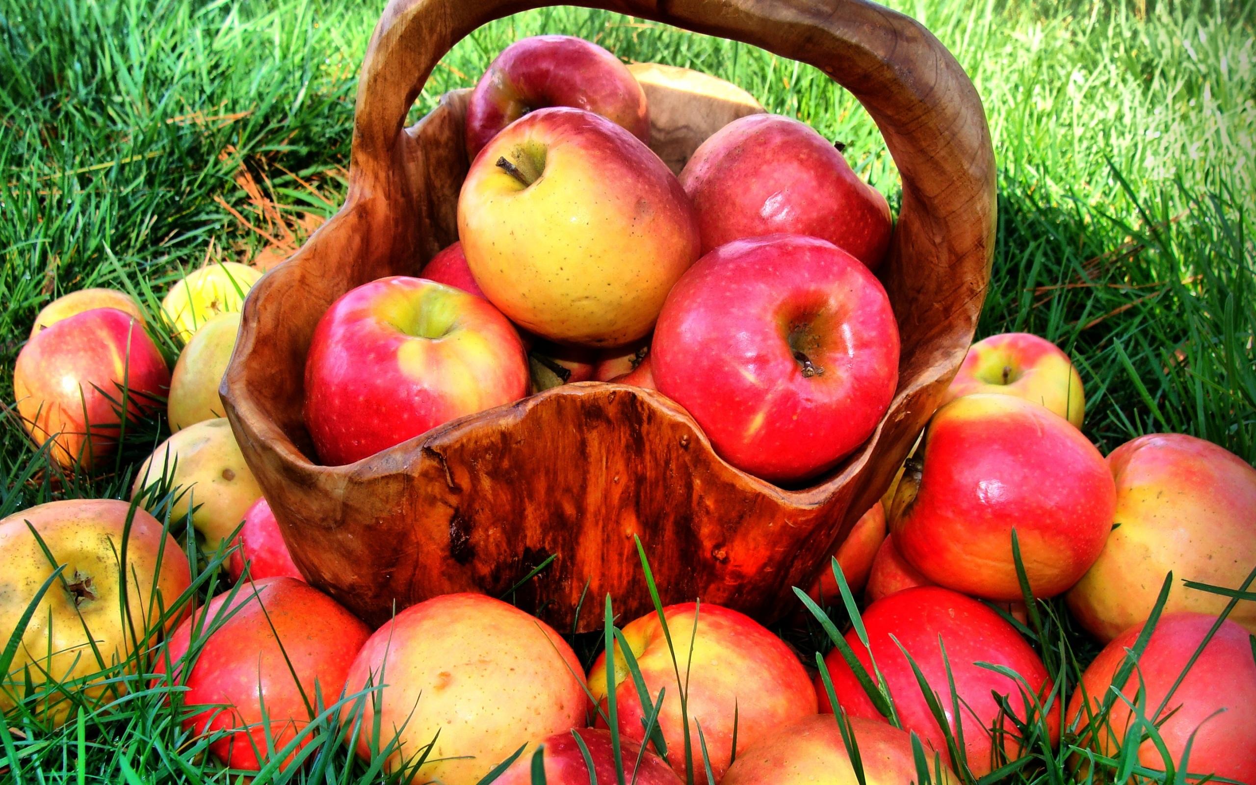 مهرجان التفاحة في غوبا